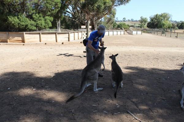Känguru Romain